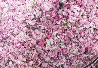 La jouissance des fleurs
