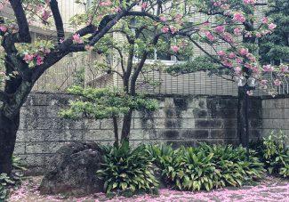 Tokyo-Kyoto #5: un super plan pour dormir à Kyoto