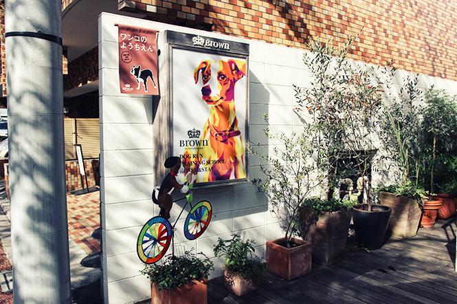 Un spa pour chiens à Tokyo