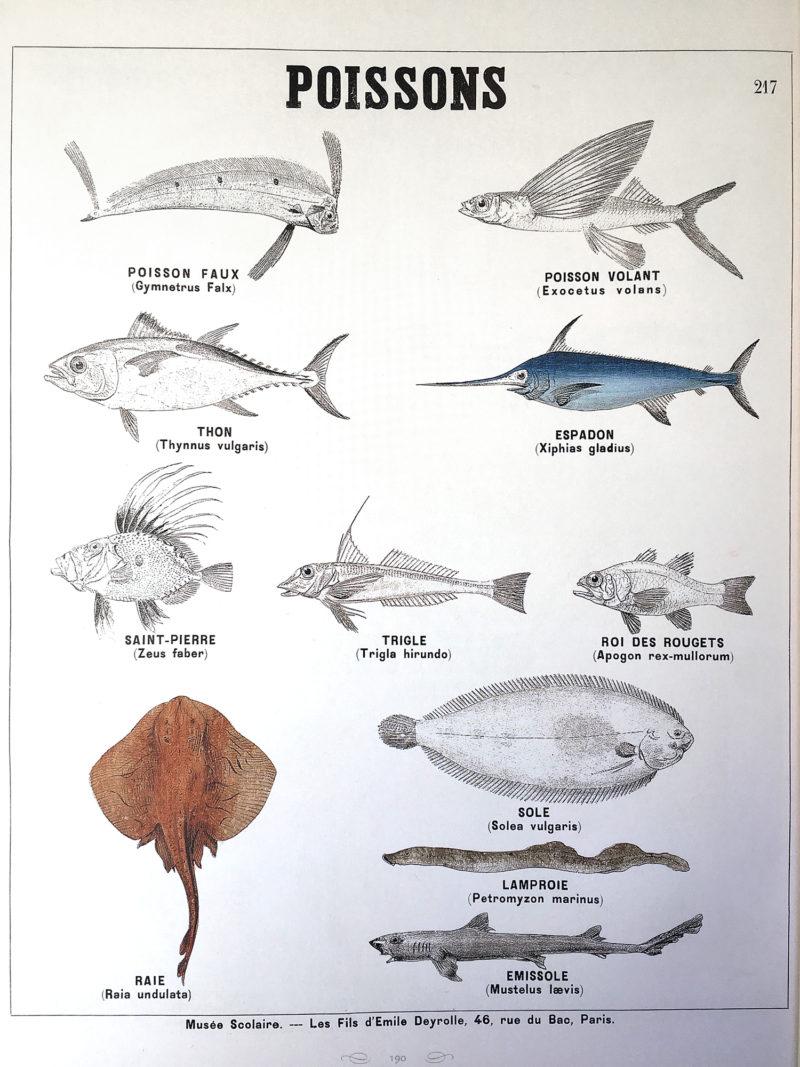 un tas de poissons datant